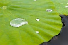 在事假的Waterdrops 免版税库存图片