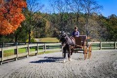 在事件期间的马和支架车手 免版税库存照片