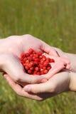 在二个现有量的草莓 库存图片