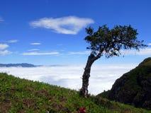 在云彩上的树 库存图片