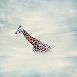 在云彩上的长颈鹿 库存照片