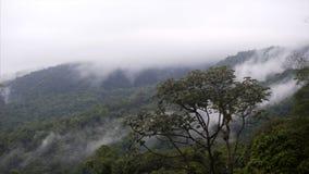 在云彩下的雨林 股票录像