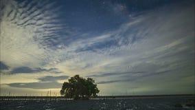 在云彩后掩藏的银河 树在美洲红树森林里 股票录像