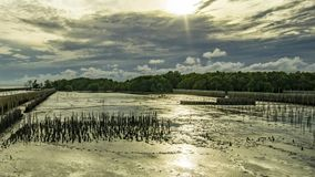 在云彩后的日落 在低潮期间,云彩移动快速的美洲红树森林 竹线防止水打破Th 股票录像