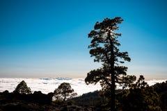 在云彩的日落与黄雀色杉木,特内里费岛 免版税图库摄影