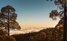 在云彩的日落与黄雀色杉木,特内里费岛 免版税库存照片