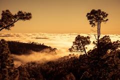 在云彩的日落与黄雀色杉木,特内里费岛 库存图片