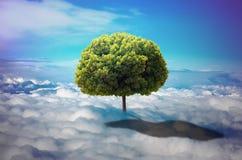 在云彩的树 库存照片