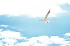 在云彩的海鸥 免版税库存图片
