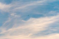 在云彩的燕子 库存照片
