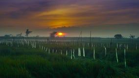 在云彩的美好的日出与在tanjung rejo kudus,印度尼西亚的米领域 免版税库存照片