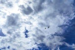 在云彩背景的野鸭 免版税库存照片