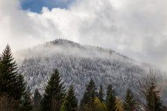 在云彩阴霾的Snowcaped treeline  免版税图库摄影