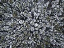 在云杉的树森林俄国人风景的第一雪 天线竞争 免版税库存图片