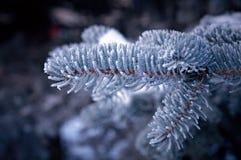 在云杉的结构树的冬天霜 免版税库存照片