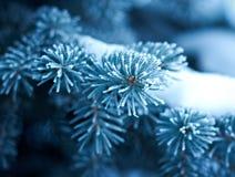 在云杉的结构树的冬天霜 免版税库存图片