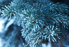 在云杉的结构树的冬天霜 图库摄影