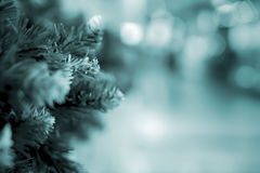 在云杉的绿色针,杉木分支 摘要被弄脏的假日定了调子与Bokeh的背景 选择聚焦 冬天 免版税库存照片