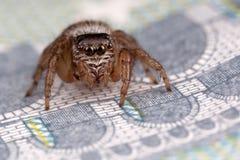 在五欧元的跳跃的蜘蛛 库存照片