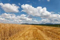 在五谷的领域的多云天空 免版税库存照片