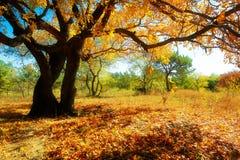 在五边形槭树下 免版税库存图片