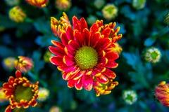 在五颜六色五颜六色的花的多彩多姿的花 免版税库存照片