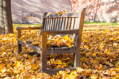 在五颜六色的下落的叶子盖的公园中间的长凳用从砖的墙壁在背景中 免版税库存图片