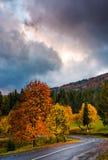 在五颜六色的叶子的华美的多云天空在蛇纹石 库存照片