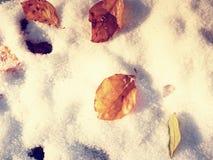 在五颜六色的叶子的第一雪 秋季本质 在秋天木头的路 库存图片