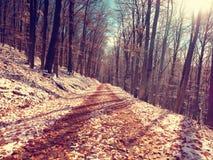 在五颜六色的叶子的第一雪 秋季本质 在秋天木头的路 免版税库存图片