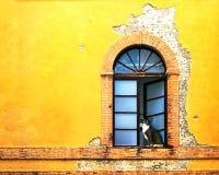 在五颜六色的墙壁上的窗口在锡耶纳意大利 图库摄影