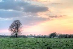 在五颜六色的天空前面的树 免版税库存图片