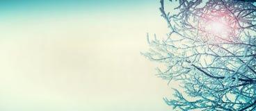 在五颜六色的天空背景的冬天多雪的树枝与文本的空间 库存图片