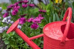 在五颜六色的春天庭院和延命菊雏菊的红色喷壶 免版税库存照片