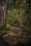 在五颜六色的树之间的河去瀑布 免版税图库摄影