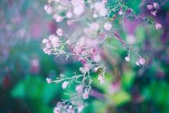 在五颜六色的梦想的不可思议的青绿的紫色模糊的背景的神仙的桃红色白色小花 免版税库存图片