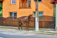 在五颜六色的橙色房子旁边的停放的马在农村特兰西瓦尼亚罗马尼亚 库存照片