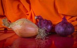 在五颜六色的橙色物质背景betw的两个葱类型 免版税库存照片