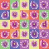 在五颜六色的正方形的Kosmeya花 彩虹哄骗背景 库存照片