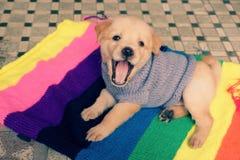 在五颜六色的毯子的逗人喜爱的小狗 免版税库存照片