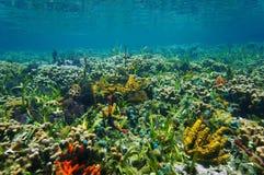 在五颜六色的海底的水下的风景 免版税库存图片