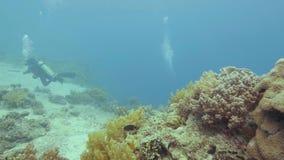 在五颜六色的珊瑚礁的热带鱼游泳在海 游泳水下的海洋和观看海洋生物的轻潜水员 股票视频