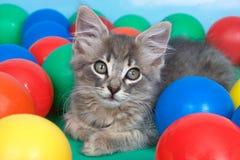 在五颜六色的球的平纹小猫 免版税库存图片
