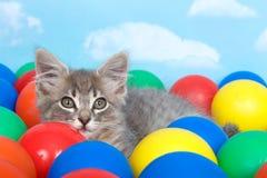 在五颜六色的球的灰色平纹小猫 库存图片
