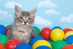 在五颜六色的球的灰色平纹小猫 免版税库存照片