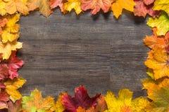 在五颜六色的秋叶外面的框架在木背景 库存图片