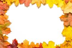 在五颜六色的秋叶外面的框架在白色背景 库存图片