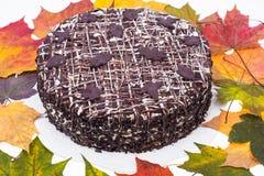 在五颜六色的秋天槭树背景的自创巧克力饼离开 图库摄影