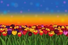在五颜六色的背景的充满活力的郁金香 免版税图库摄影