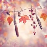 在五颜六色的背景的秋天构成 免版税库存图片